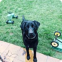 Adopt A Pet :: Bleu - San Francisco, CA