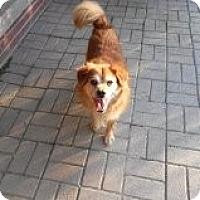 Adopt A Pet :: Pumpkin - Pineville, NC