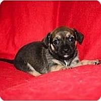 Adopt A Pet :: McCabe - Estes Park, CO