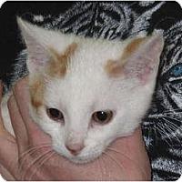 Adopt A Pet :: Spritz - Port Republic, MD