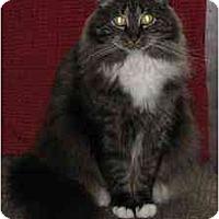 Adopt A Pet :: Samantha - Austin, TX