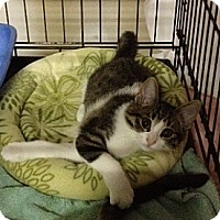 Adopt A Pet :: Smith - Byron Center, MI