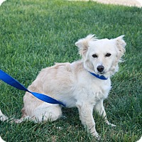 Adopt A Pet :: Cloie - California City, CA