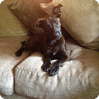 Adopt A Pet :: Sassy - Southington, CT