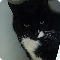 Adopt A Pet :: Bessie - Hamburg, NY