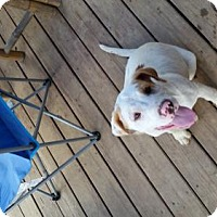Adopt A Pet :: Talon - Decatur, AL
