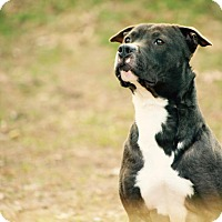 Adopt A Pet :: Runner - Vancouver, BC
