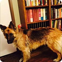 Adopt A Pet :: Maddy - Santa Clarita, CA