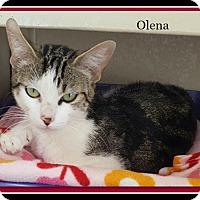 Adopt A Pet :: Olena - Tombstone, AZ
