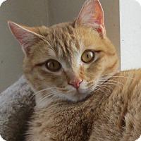 Adopt A Pet :: Perkins - Buhl, ID