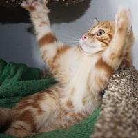 Adopt A Pet :: Stetten - Louisville, KY