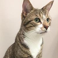 Adopt A Pet :: JOEY - Toledo, OH