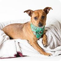 Adopt A Pet :: *DUSTY - Sacramento, CA