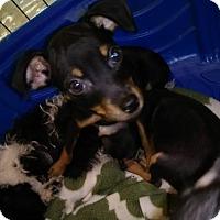 Adopt A Pet :: Nate Orlando Chapter - Orlando, FL