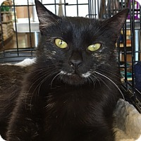 Adopt A Pet :: .Sparkle - Ellicott City, MD