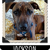 Adopt A Pet :: Jackson - West Allis, WI