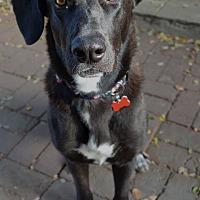 Adopt A Pet :: Nina - Studio City, CA