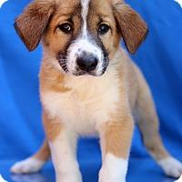 Adopt A Pet :: Clifton - Waldorf, MD