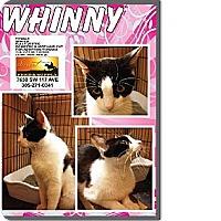 Adopt A Pet :: Whinny - Miami, FL