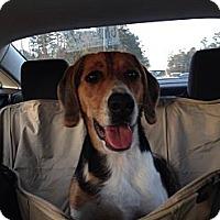 Adopt A Pet :: Roscoe - Hendersonville, TN