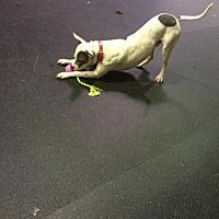 Adopt A Pet :: Dallas - Silver Spring, MD
