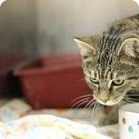 Adopt A Pet :: Belle - El Cajon, CA