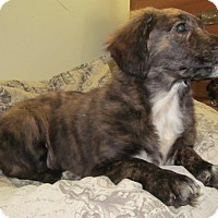 Adopt A Pet :: Raven - Ball Ground, GA