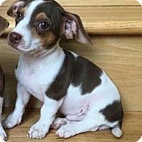 Adopt A Pet :: Rico - Marlton, NJ