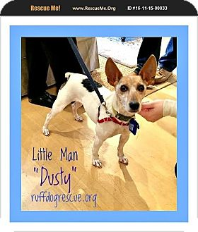 Jack Russell Terrier Mix Dog for adoption in Milton, Georgia - Little Man