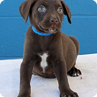 Adopt A Pet :: Lincoln - Waldorf, MD