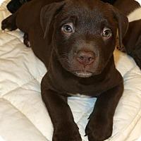 Adopt A Pet :: Hula - New City, NY