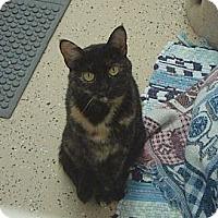 Adopt A Pet :: Lyla - Pekin, IL