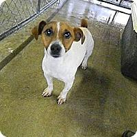 Adopt A Pet :: Jack - Camden, SC