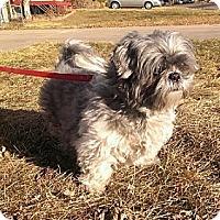 Adopt A Pet :: Cassie - Denver, CO