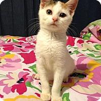 Adopt A Pet :: Priscilla - Walnut, IA