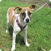 Adopt A Pet :: Talulah - Humble, TX