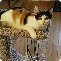 Adopt A Pet :: Meatball - McDonough, GA