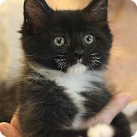 Adopt A Pet :: Lucky Sherman - Canoga Park, CA
