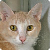 Adopt A Pet :: Bellevue - Republic, WA