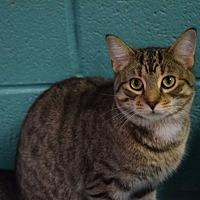 Adopt A Pet :: Twix - Pottsville, PA