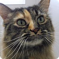 Adopt A Pet :: Roberta - Creston, BC