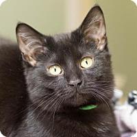 Adopt A Pet :: Pinot - Fargo, ND