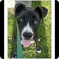 Adopt A Pet :: JAKE - Winchester, CA