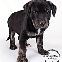 Adopt A Pet :: Mason - Lodi, CA