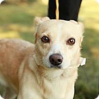Adopt A Pet :: Chong - Lancaster, OH
