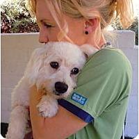 Adopt A Pet :: Ripley - Mission Viejo, CA