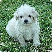 Adopt A Pet :: Wendell - La Habra Heights, CA