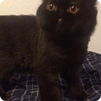 Adopt A Pet :: Fanny - Beverly Hills, CA