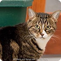Adopt A Pet :: Raja - Fountain Hills, AZ