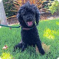 Adopt A Pet :: Donovan - Mission Viejo, CA